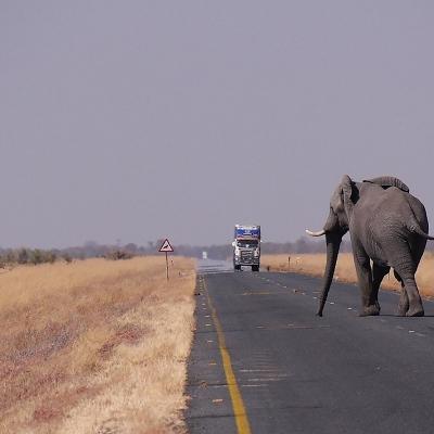 Namibia: Fly & Drive nella natura Fly & Drive : auto