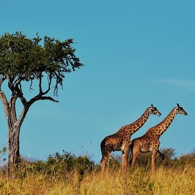 Tanzania Safari Experience Spedizioni Avventura