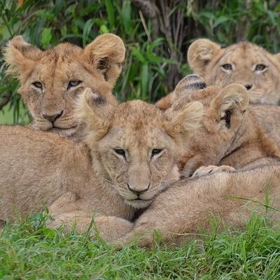 Kenya Safari Experience Safari