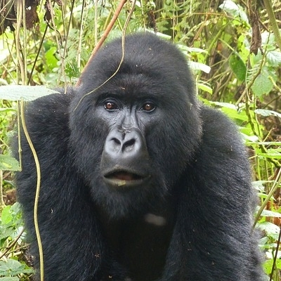 Rwanda & Uganda Gorilla Discovery Spedizioni Avventura