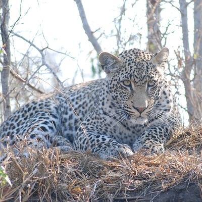 Explore Kruger National Park & Namibia