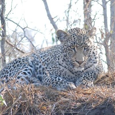 Explore Kruger National Park & Namibia Safari